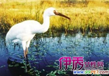 阳观鸟节即将启动 百位摄影爱好者齐聚康平(图
