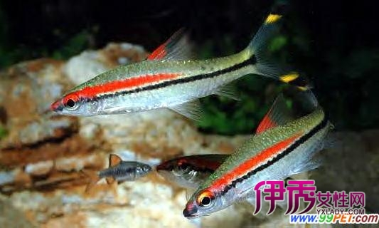养好鱼保持水质清纯狠关键(图)_宠物水族_宠物
