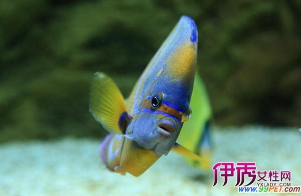 水质酸碱对鱼的影响(图)_宠物水族_宠物-伊秀