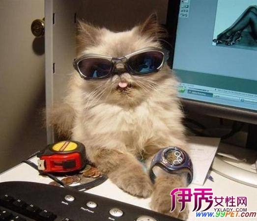 潮猫带眼镜手机壁纸