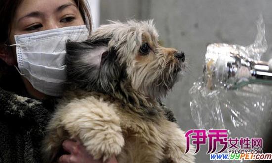 由于福岛第一核电站在地震中受损发生泄漏,居住在附近的居民都要接受