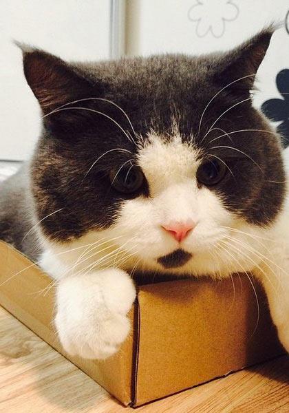 天生惊讶脸小猫 就是不能淡定拍照