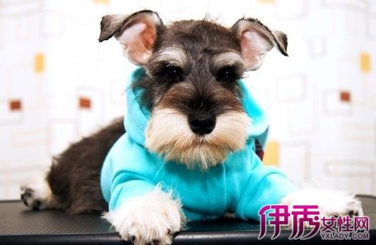 狗狗穿衣前后图片