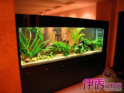 【龙鱼鱼缸制作】【图】龙鱼鱼缸制作 给鱼儿