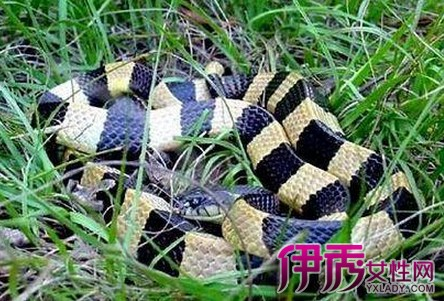 【图】盘点世界上最毒的蛇排名