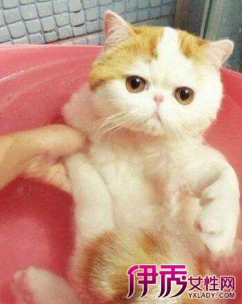 萌猫红小胖snoopy为什么