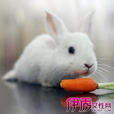 【图】兔子吃胡萝卜吗? 兔子不吃野生块根类蔬菜