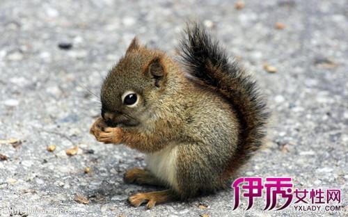【图】小松鼠图片大全 长着毛茸茸的长尾巴的小动物