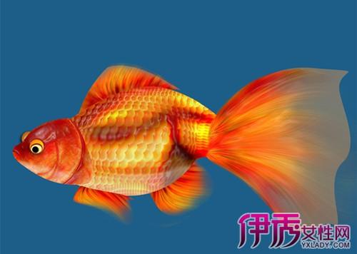 【金鱼图片大全】【图】金鱼图片大全