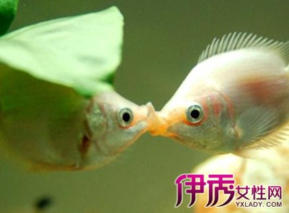 【热带鱼种类图片大全】【图】热带鱼种类图片