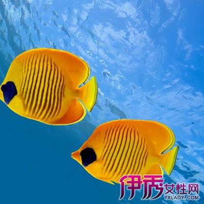 【屏保热带鱼】【图】屏保热带鱼图片大全