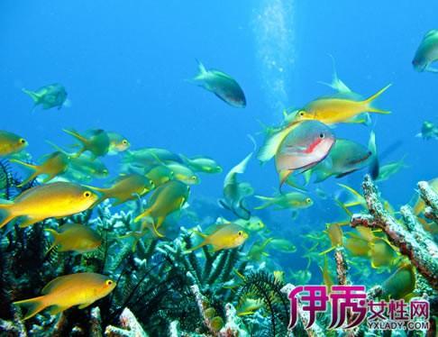 壁纸 海底 海底世界 海洋馆 水族馆 桌面 486_374