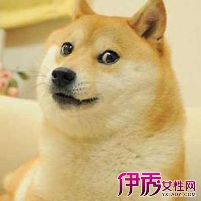 【柴犬搞笑】【图】柴犬搞笑大表情包白兔萌呆表情图片欣赏分图片