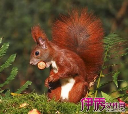 这种可爱的小动物如今却面临着灭绝