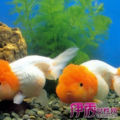 壁纸 动物 海底 海底世界 海洋馆 水族馆 鱼 鱼类 400_400