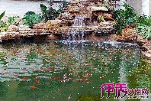 我的世界养殖场设计图-锦鲤鱼池设计图片曝光 6个养殖要点须知道
