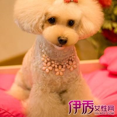 泰迪狗多大剪发型分享展示