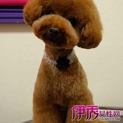 【泰迪狗造型】【图】怎样给泰迪狗造型