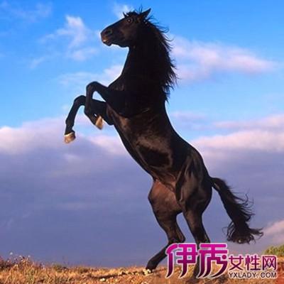 【图】大图展示马的交配 一分钟了解马的生活习性图片