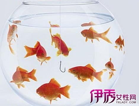 【图】小金鱼怎么养不会死? 11招送给养鱼新手