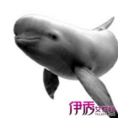 【图】尖嘴尖耳尖下巴的动物是什么? 了解11种濒危动物