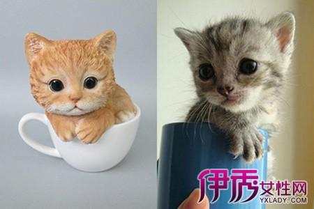 伊秀生活网 宠物 / 正文  茶杯猫的身体特别小,它和茶杯犬一样,因为