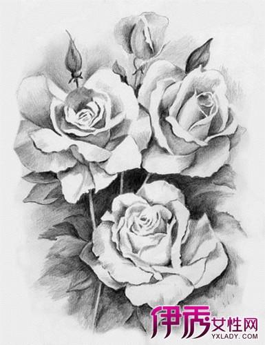 【图】素描玫瑰花画法