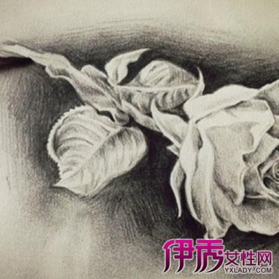黑玫瑰花素描图片