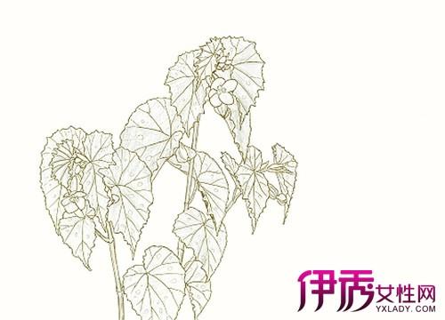 【图】植物动漫素描作品欣赏 探究素描的技巧方法及构图-植物动漫素描图片