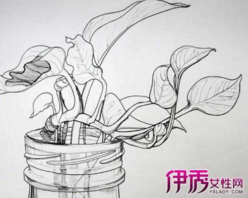 【图】简单的素描植物速写图片展示 速写的有哪些分类你知吗-简单的图片