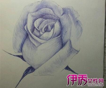 圆珠笔画玫瑰图片