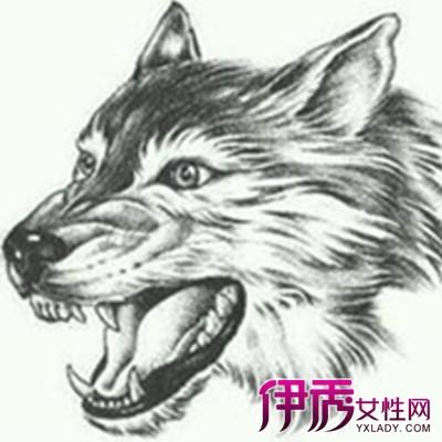 【图】欣赏狼头素描画 更加了解素描知识-狼头素描图片