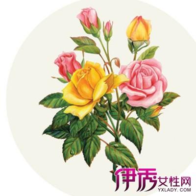 【图】欣赏手绘彩铅玫瑰花图片 教你如何画出你心中最美的玫瑰