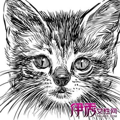 【图】欣赏呆萌可爱猫咪手绘的图片