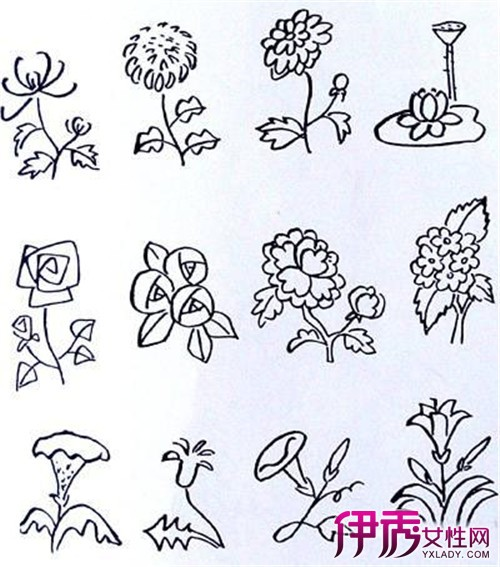 简笔画图片大全植物
