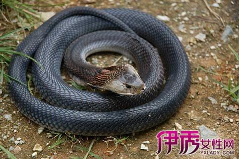 梦到蛇预示着什么_【图】周公告诉你梦到蛇预示着什么? 梦与心理学相结合揭秘答案
