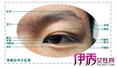 素描 眼睛画法图片