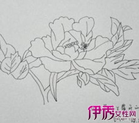 【图】牡丹花简笔画图片曝光 让你感受牡丹花高贵的气质