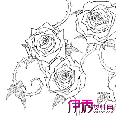 怎么画彩铅手绘玫瑰花 介绍手绘有关知识点图片