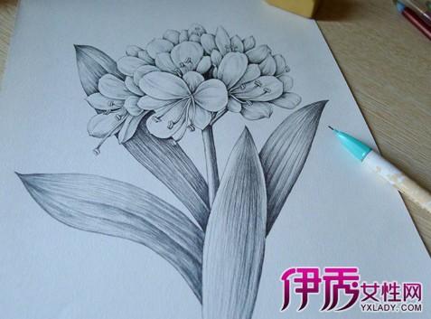铅笔手绘花图片