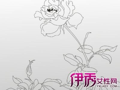 一支玫瑰花铅笔手绘-玫瑰花画画图片图片