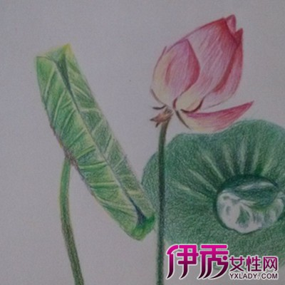 【图】彩铅手绘小清新荷花图片精选 精美且意境十足