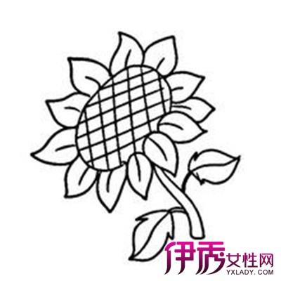 【图】太阳花简笔画图片大全
