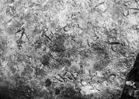石头表面刻有符号一样的印记