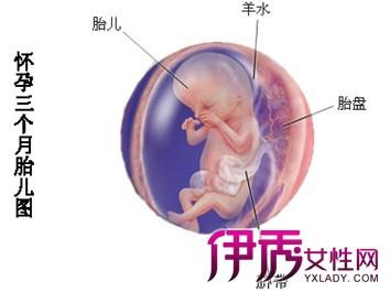 胎儿一个月有多大_胎儿三个月在肚子里有多大图片_百度宝宝知道