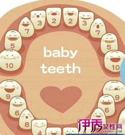 【图】小孩换牙顺序图