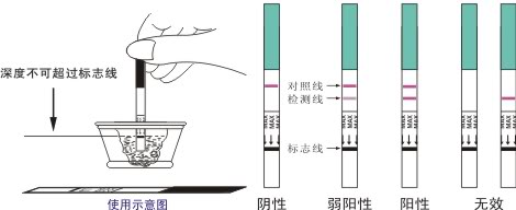 【图】验孕纸什么时候测最准 以及结果判定的方法