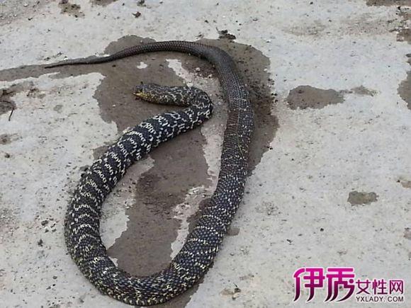 孕妇梦见大黑蛇被杀了是什么意思