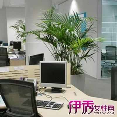 【图】解密办公室植物摆放位置作用 绿植的摆放位置助旺事业运?
