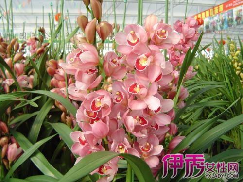 【图】名贵兰花品种图片大全 我国主要名种兰花的特征及辨认方法-名